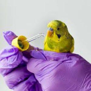 BIRD MEDICATIONS